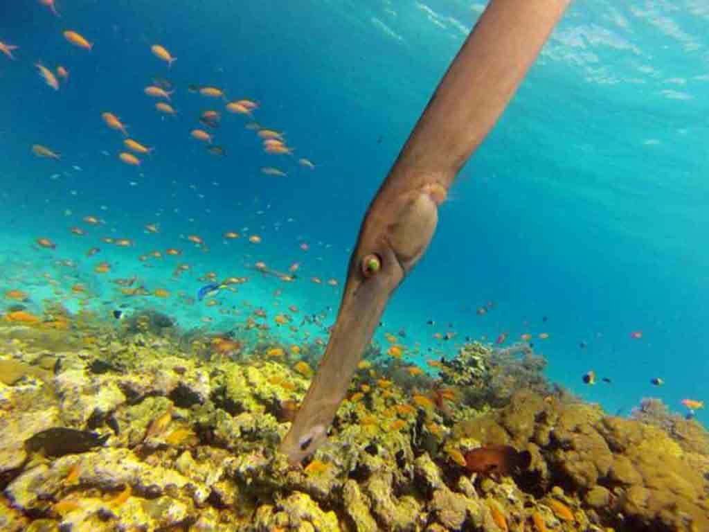 Nosatá ryba. Zdroj: internet