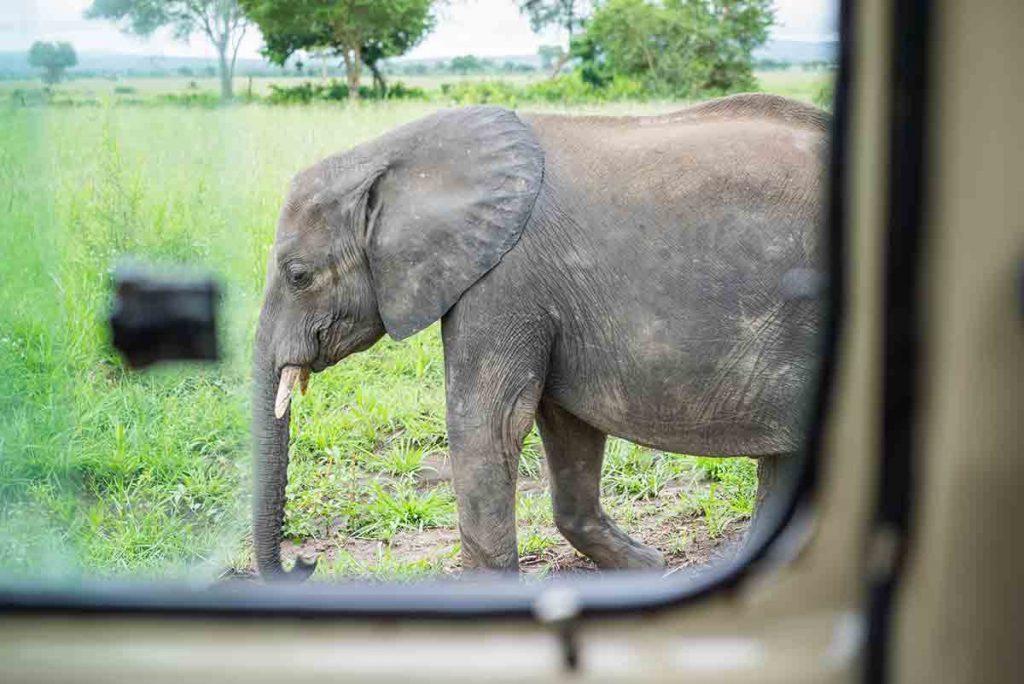 Na dosah. Slony nemajú strach z návštevníkov parku.